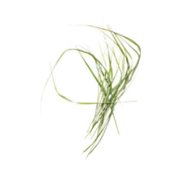 Antonia and Fabio Duealberi_Grass Project III