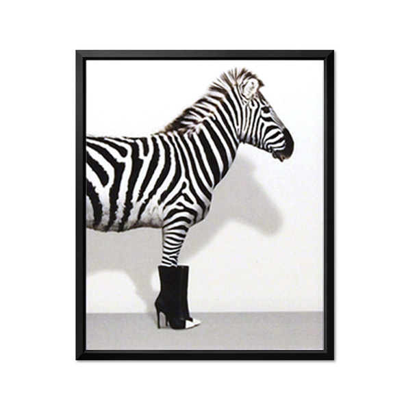 abc collection_Zebra